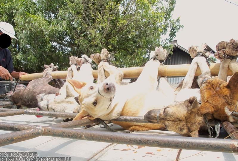 honden trafficker