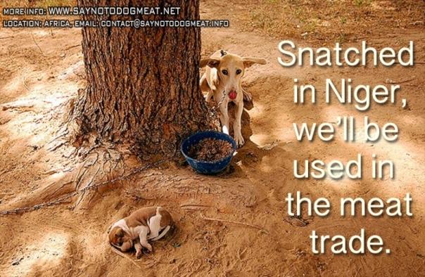 www.Saynotodogmeat.Net