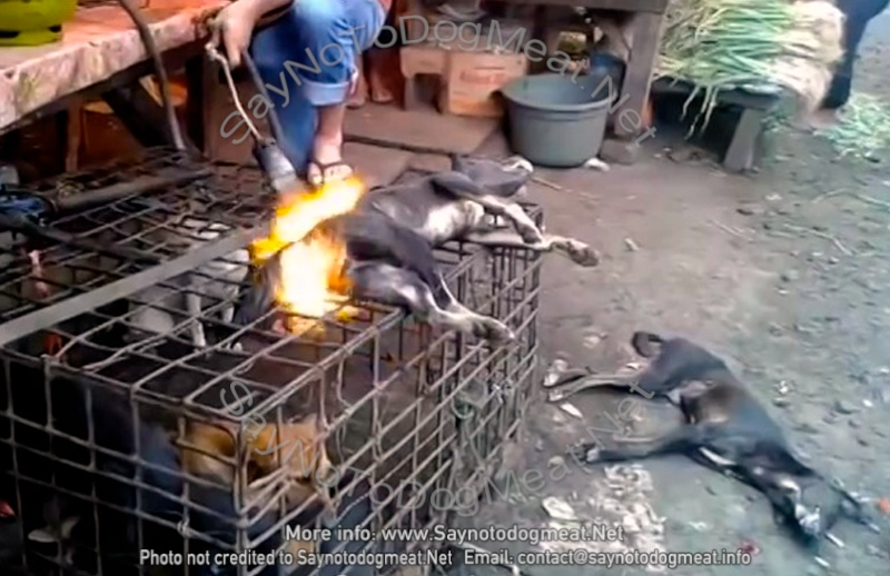 INDONESIA, VIDEO –LIVING DOGS SET ON FIRE ON TOP OF