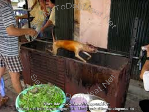 Vietnam dog meat eatery which kills dogs on the spot.