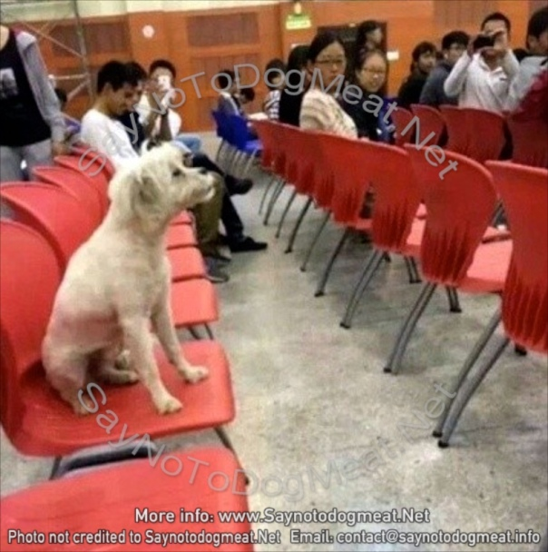 """""""Learning Pa"""", the dog, sat in on daily lectures for three years."""