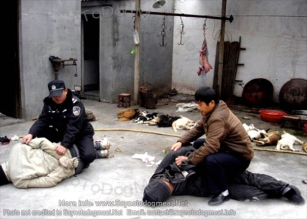 China: dog snatchers being arrested.