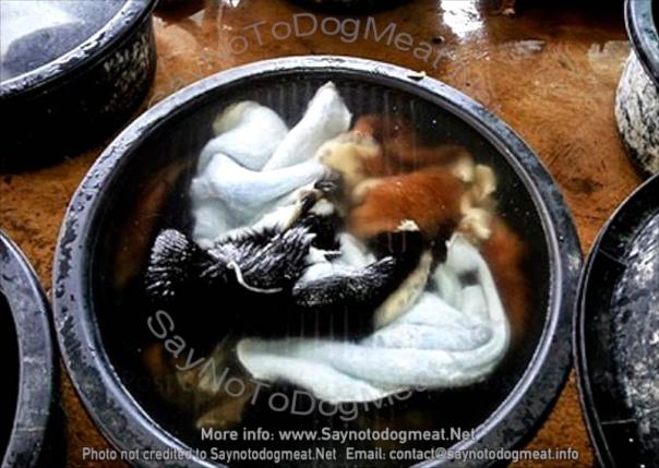 Dog skins from Thailand's dog meat/dog skin trade.