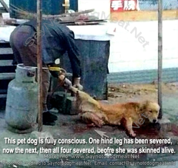Raising the awareness about the human impact on the lives of animals - Page 13 Www-saynotodogmeat-net-403