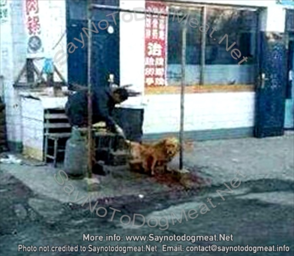 Raising the awareness about the human impact on the lives of animals - Page 13 Www-saynotodogmeat-net-413