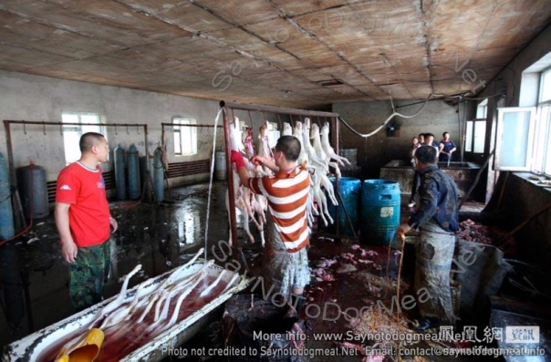 Chinese slaughter house.