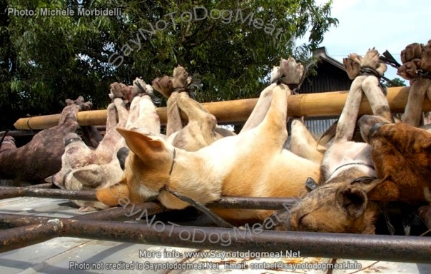 www.Saynotodogmeat.Net