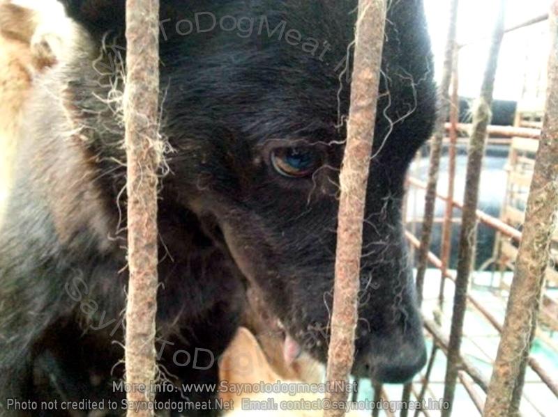 Dog Meat Dog'sDespair