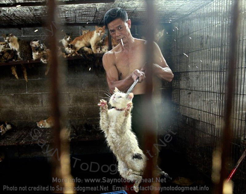 China: Media On Stand-By For Yulin Dog Meat Festival