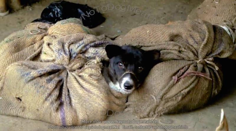 India: Nagaland Dog MeatMarket