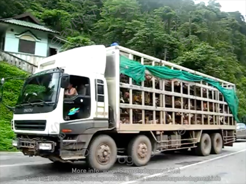 Video – Vietnam: Dog Meat TruckHell