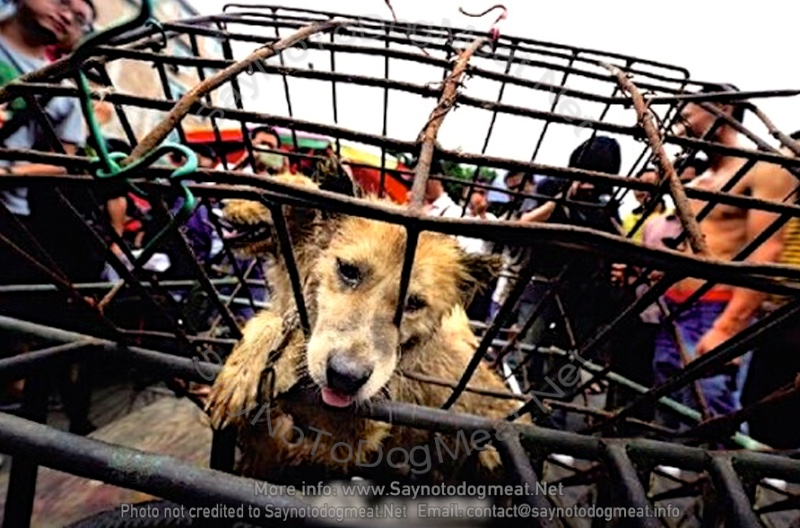 China: Yulin Dog Meat Festival