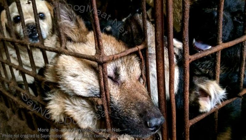 North Korea: Dog Meat – 'NationalFood'