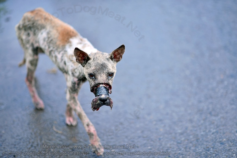Vietnam: One Dog Meat Dog's OwnHell