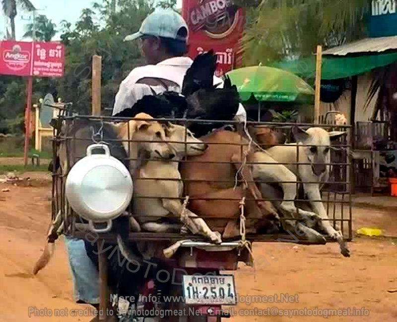 Cambodia: Too Many Pets Stolen For DogMeat