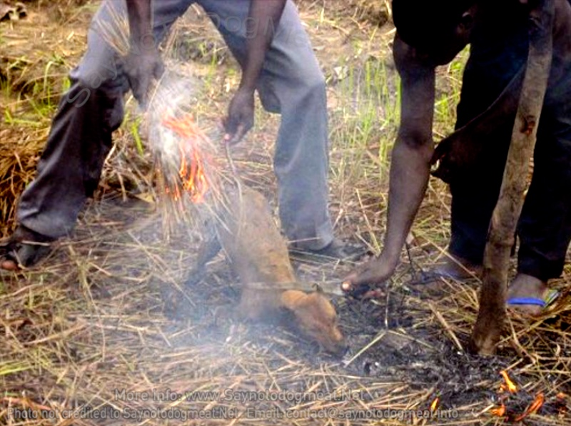 Africa – Benin: Theft Of Dogs For DogMeat