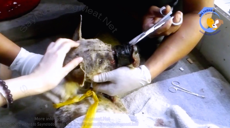 Video – Vietnam: Taped-Mouth-Dog's Medical Update #1