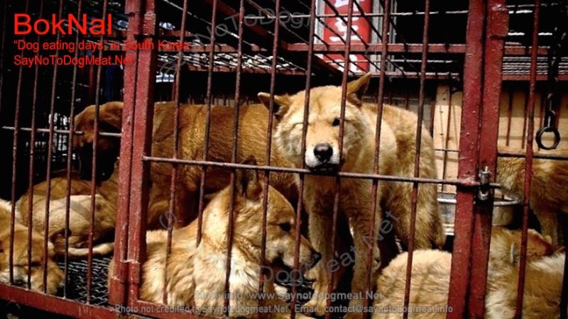 BokNal: South Korea's Dog Eating Days/1