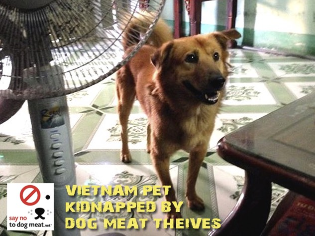 Vietnam: Pet Dog Kidnapped For Dog Meat