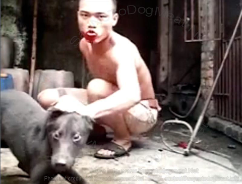 VIDEO – Vietnamese Dog Butcher Taunts Animal Lovers