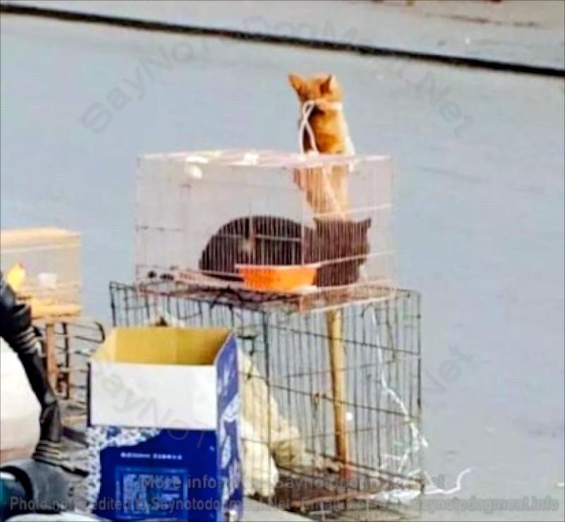 Cruel Cat MeatTrade
