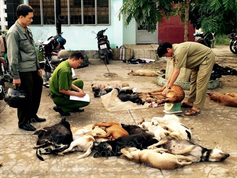 Vietnam: Dog Thieves Caught By Police