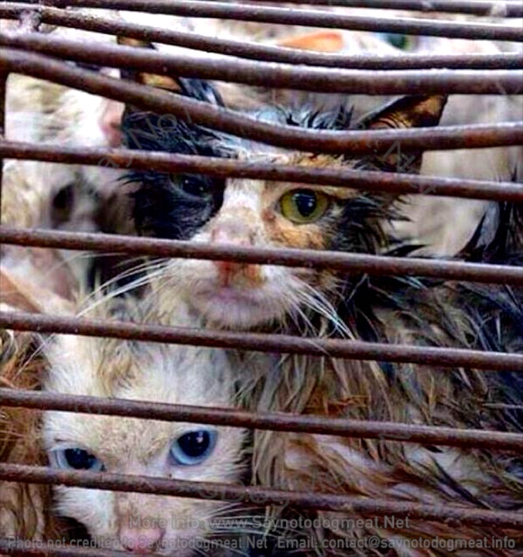 California, USA: Eating Cat Meat In Your Own Home