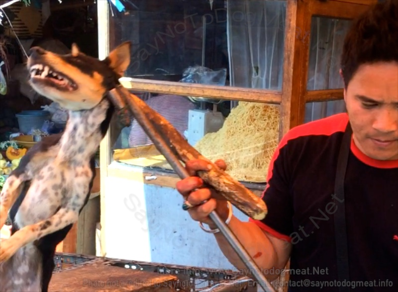 Jakarta, Indonesia: New Regulations – Dog Meat Dogs Must Have Health Certificates
