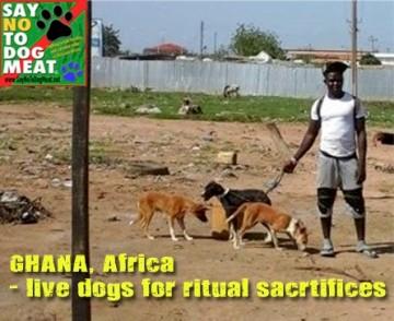 SNTDM Ghana2