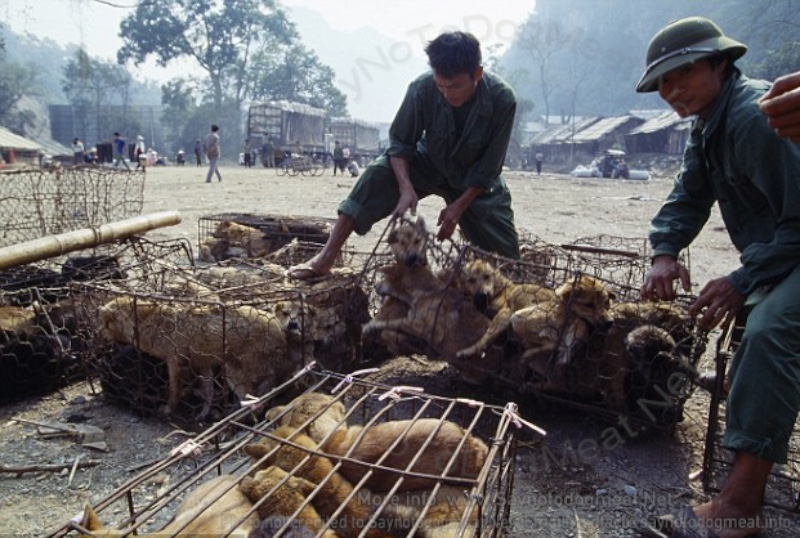 China: Village's Pet Dogs Killed And Eaten